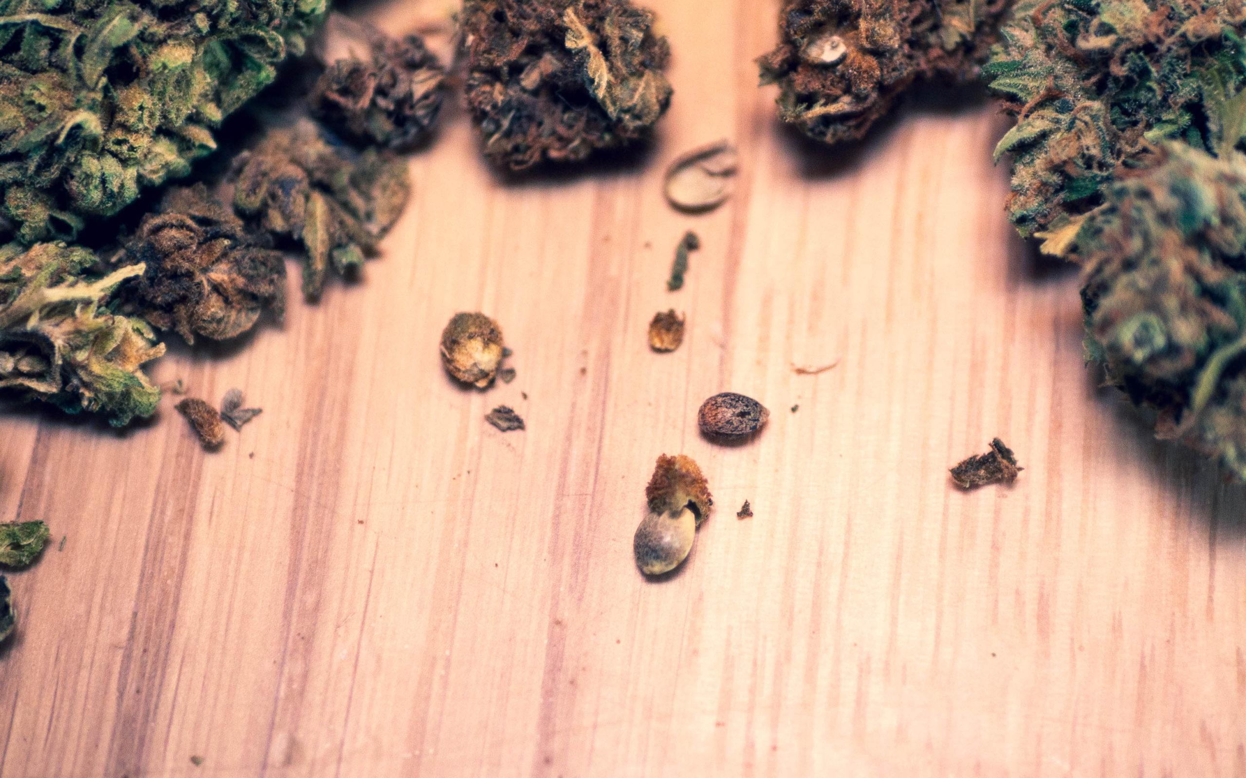 CBD Samen Cannabis Buds