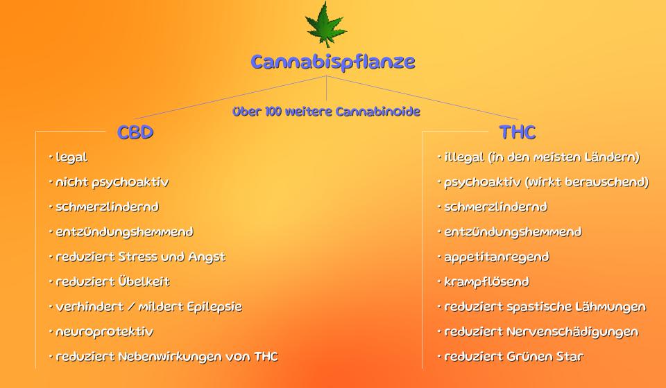 Tabelle Übersicht CBD und THC und deren Wirkung