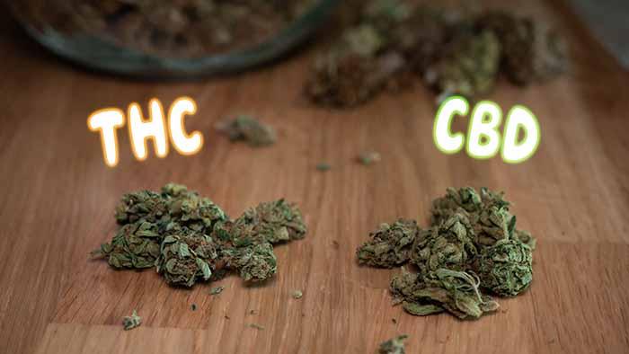 THC und CBD Blüten