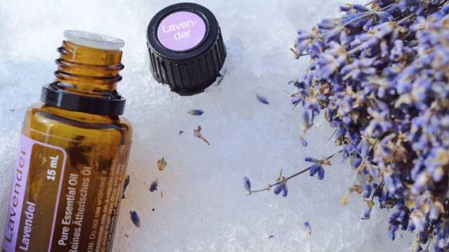 Lavendelöl und Lavendel Terpene