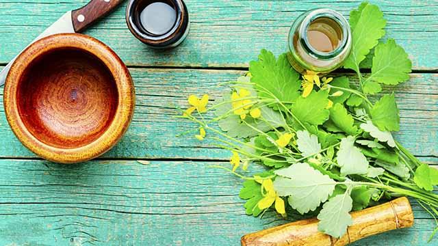 Damianakraut und Tee